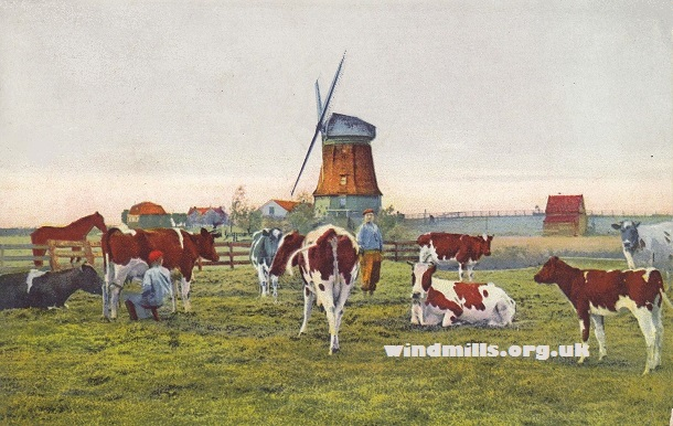windmills cows holland